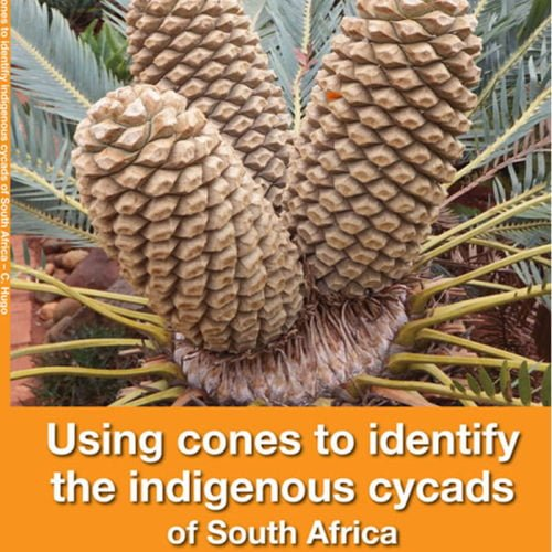 Using Cones to Identify Indigenous Cycads of South Africa book cover