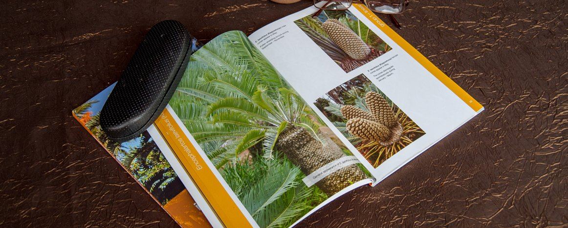 Book on how to identify indigenous cycads of South Africa.